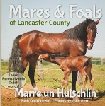 Mares & Foals of Lancaster County